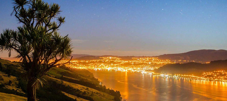 local SEO services in Dunedin